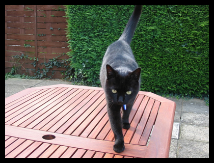 A picture of George standing on our garden table, facing the camera